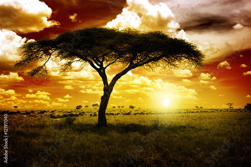 Poster Africa Sunset
