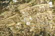 Aged tree bark texture