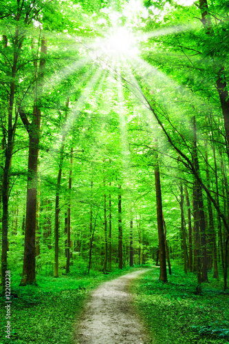 nature. path in forest with sunshine - 12202228