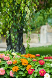 Zahrada selektivní zaměření