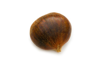 One chestnut isolated on the white background