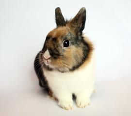 bunny look