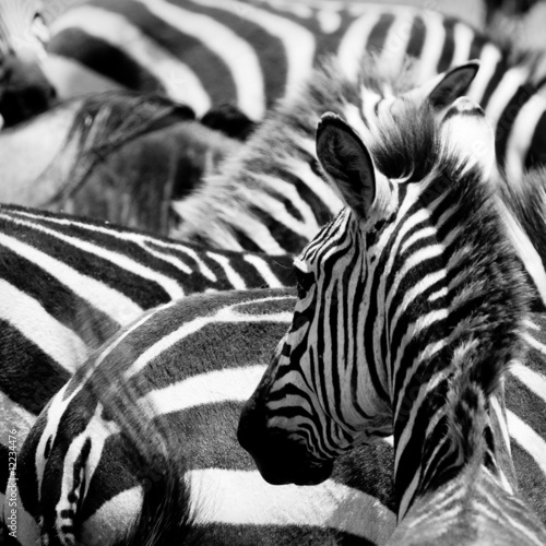 Fotobehang Zebra pattern of zebras