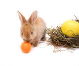 little rabbit has a taste of colored egg #2 - Fine Art prints
