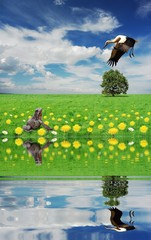 hunting on frog