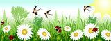 Spring time with daisies, ladybugs and swallows