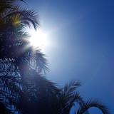sun through palm leaves, lens flare poster