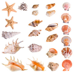 Seashells and starfish collection