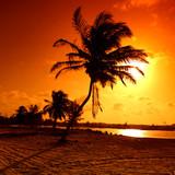 Fototapety sunrise palm