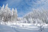 winter ski track pathway poster