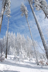 winter mountains snow forest