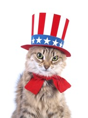 Cute patriotic cat