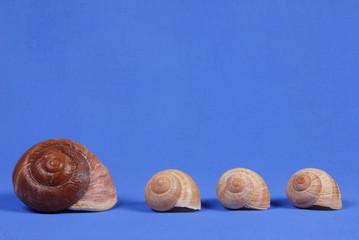 Snail houses
