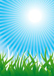 Vector background with grass and sun beams in the sky