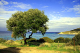 Fototapety olivier