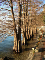 Lake of Iseo