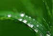 Wasserperlen