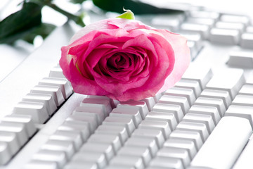 Rose on keyboard