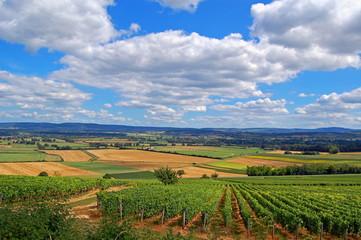 Paysage de vignes et de cultures.