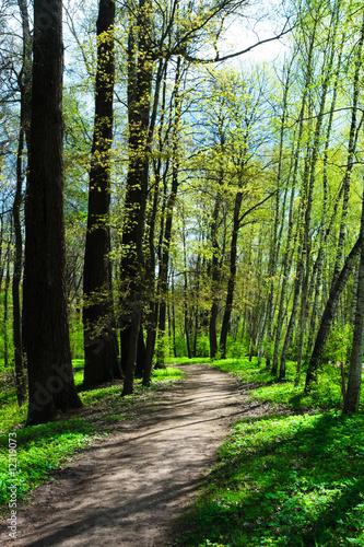 Spring park - 12319073