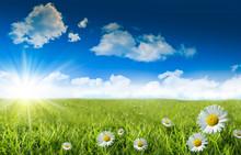 "Постер, картина, фотообои ""Wild daisies in the grass with a blue sky"""