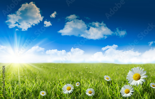 canvas print picture Wild daisies in the grass with a blue sky