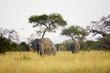 Elephant herd walking towards camera