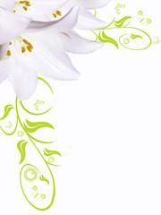 Blumenhintergrund,Lilie weiß