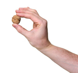 hand holding a walnut isolated over white background
