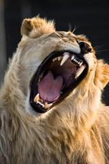 Powerful Yawn