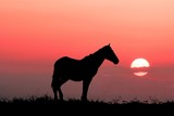 graceful horse on a evening background sky poster