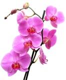 Fototapeta uroda - botanika - Kwiat
