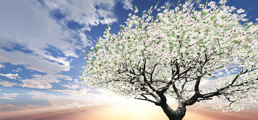 Blossoming tree in the sunset