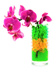 orchid in glass with hydrogel