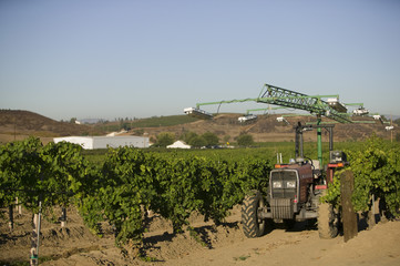 Agricultural sprinkler in vineyard