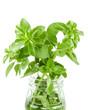 fresh organic herbs basil sprig in a jar