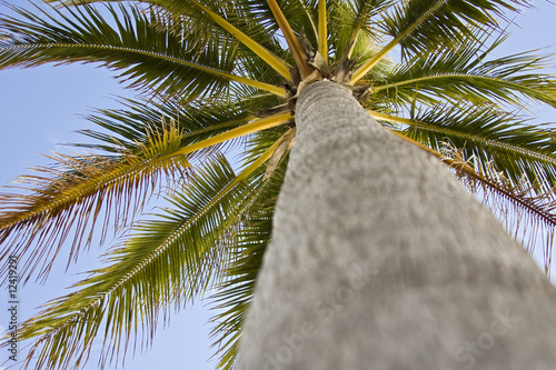 Palm tree on the ocean in Miami