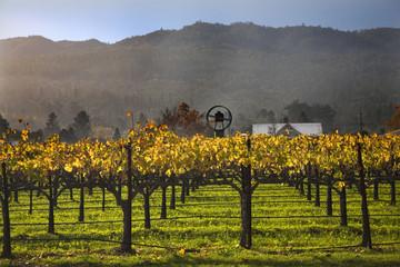 Fall Wine Vines Yellow Leaves Vineyards Fog Tree Napa California