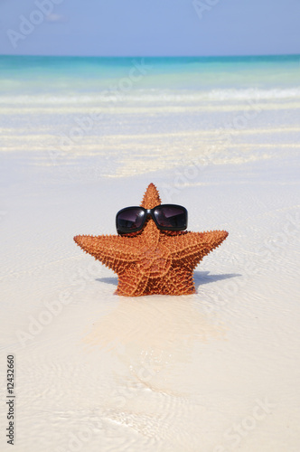 Funny starfish with sunglasses