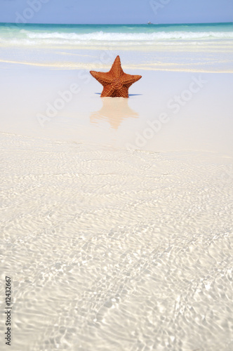 Starfish on tropical paradise
