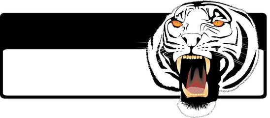 Muzzle of the growling shown furious tiger