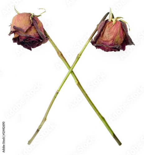 Old dried roses in a cross symbol against a white background