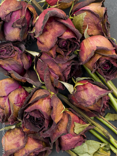 Old dried roses against a dark background