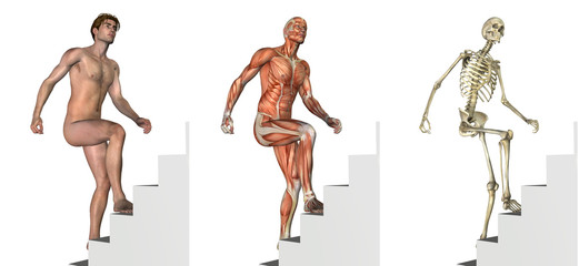 Anatomical Overlays: Climbing Stairs