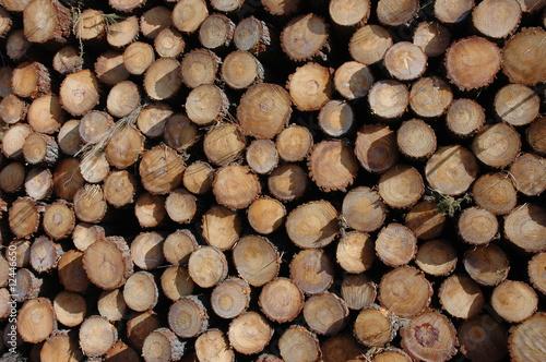 Stere de bois de photos katie photo libre de droits 12446650 sur - Une stere de bois ...