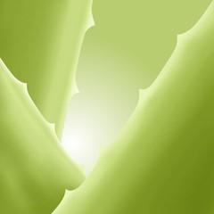 aloe vera verde