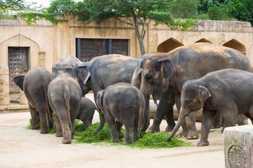 Elephants eat grass