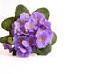 Muttertag,Frühlingsblüme
