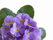Blütenhintergrund,Frühling