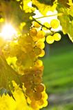 Yellow grapes - Fine Art prints
